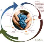 """Nasce """"Legàmi di Vite"""", un importante contratto di sviluppo """"green"""" nel comparto vitivinicolo. Interventi per oltre 115 milioni di euro di cui 81 milioni sul versante ambientale"""